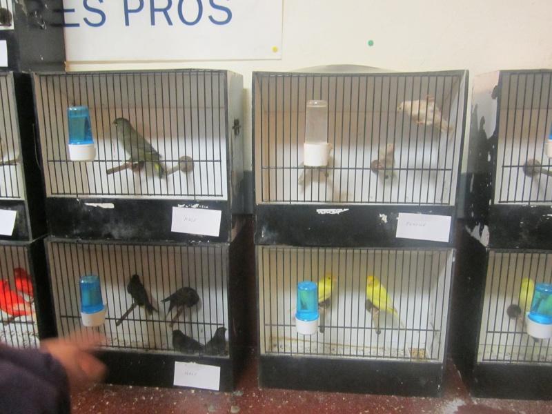 bourses d'oiseaux a flemalle - Page 2 Img_3923