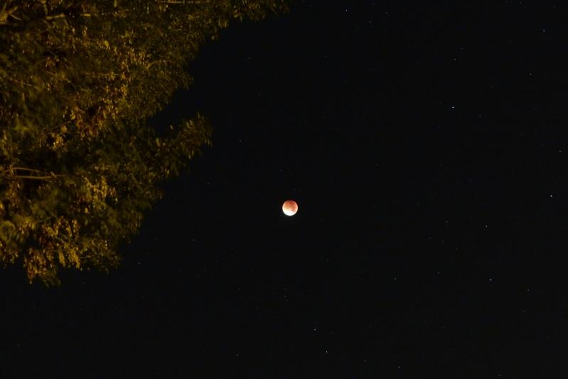 Eclipse totale de Lune - 28 septembre 2015 P1090912