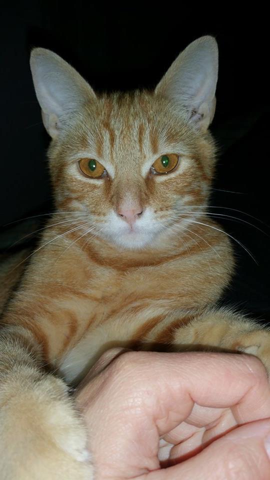 Lou 6 mois - a adopter Lou110