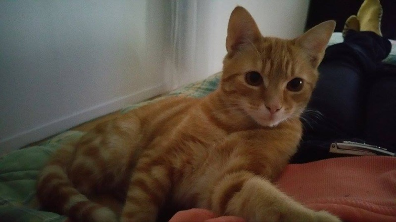 Lou 6 mois - a adopter Lou210