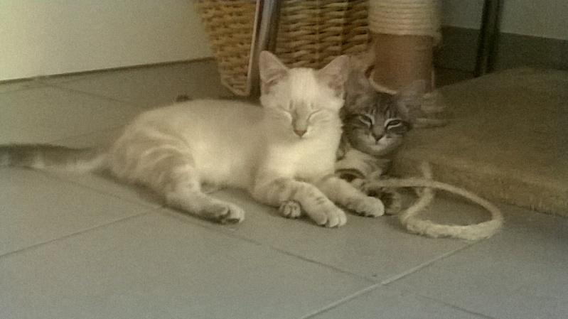Lounie et Louka Lounie12