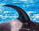Identifier Les orques de l'aquarium de Moscou Narnia15