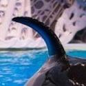 Identifier Les orques de l'aquarium de Moscou Narnia16
