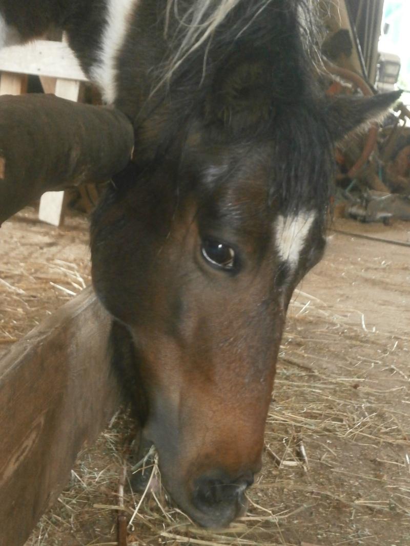 CANNELLE - ONC poney née en 2009 - adoptée en décembre 2013 par Catie - Page 2 P9220110