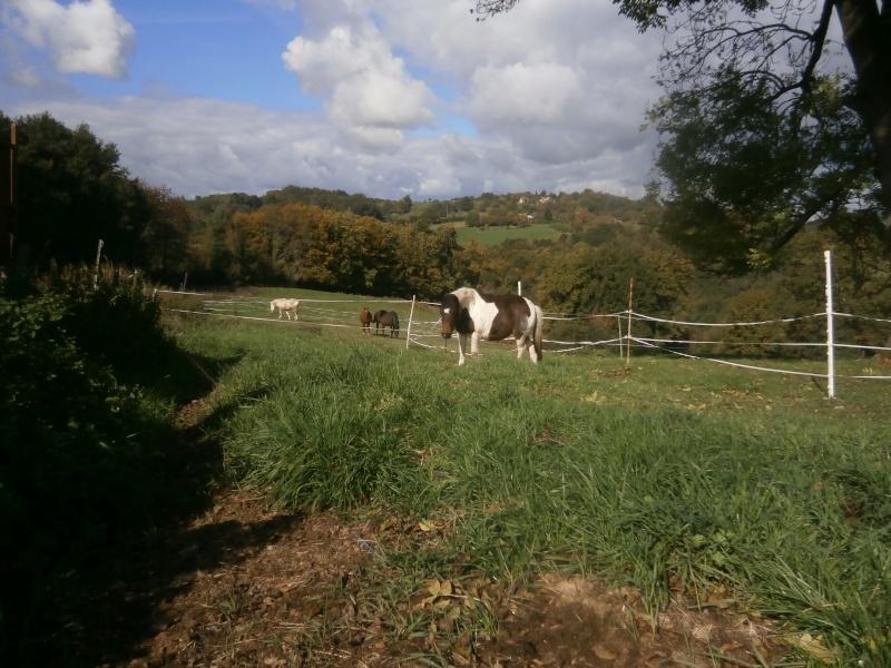 CANNELLE - ONC poney née en 2009 - adoptée en décembre 2013 par Catie - Page 3 Pa080110