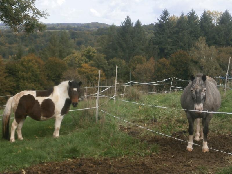 CANNELLE - ONC poney née en 2009 - adoptée en décembre 2013 par Catie - Page 3 Pa080112