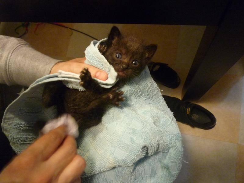 PEPh Y MOUh,dos bonitos bebes  de menos de 1 mes,¡Adoptados! P1020624