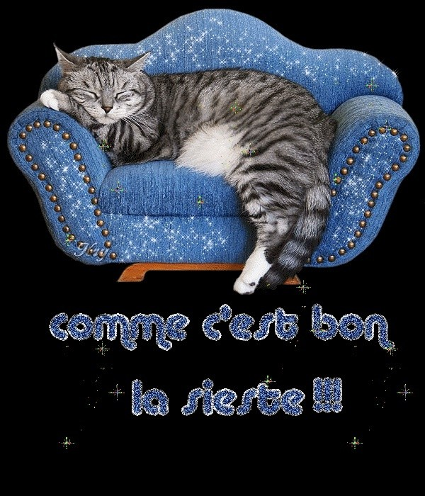 PIMPRENELLE, bébé chat femelle type européen - mai 2015 - adoptée par Sylvie (dpt 83) 8vgjfi10