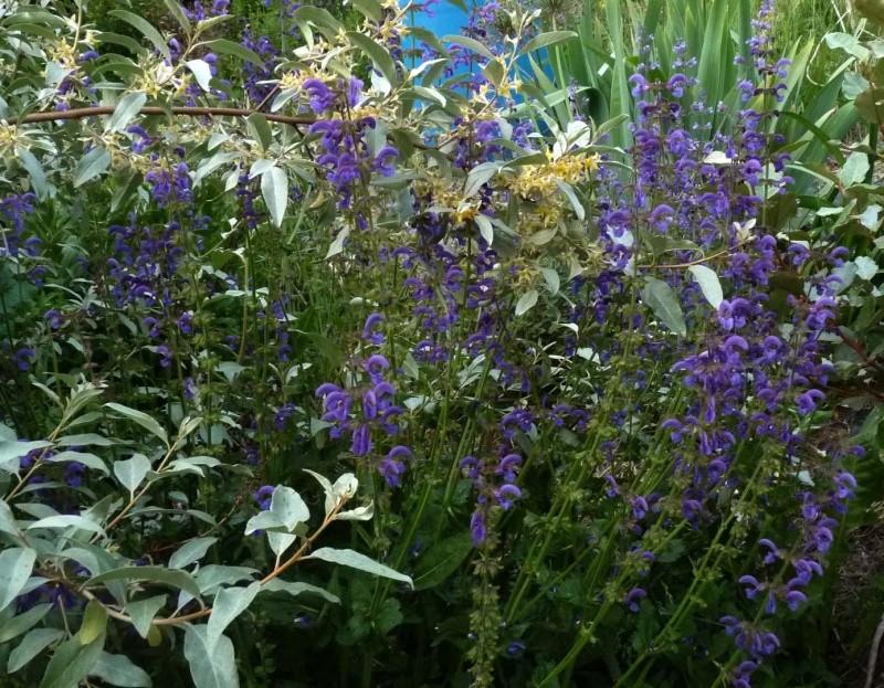 les plantes que je propose P1090210