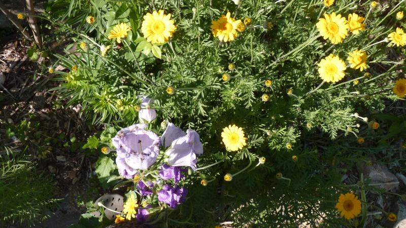 les plantes que je propose - Page 2 P1090414