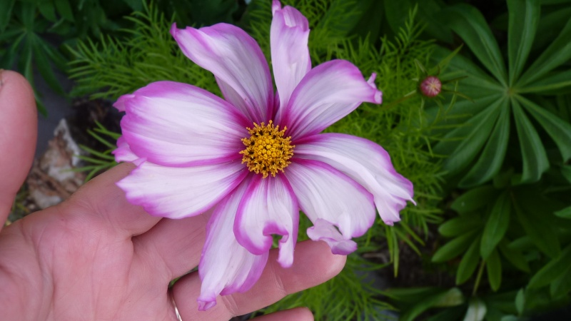 les plantes que je propose P1090511