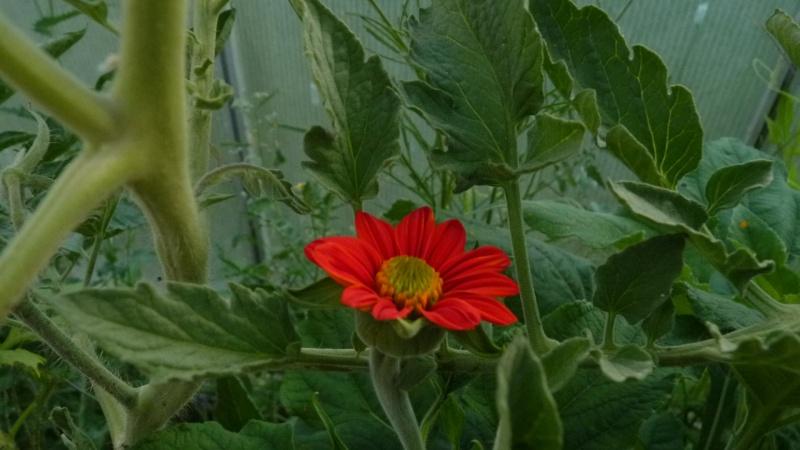 les plantes que je propose - Page 2 P1090717