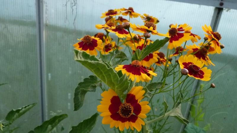 les plantes que je propose - Page 2 P1090718