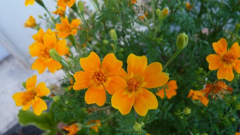 les plantes que je propose P1090832