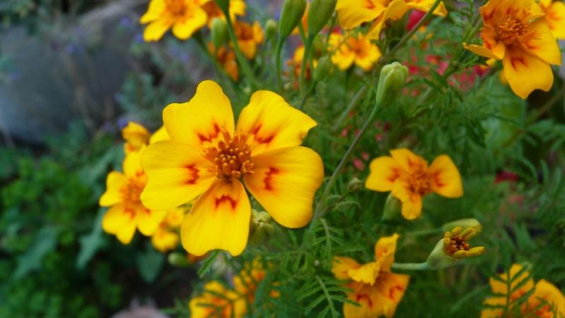 les plantes que je propose P1090833