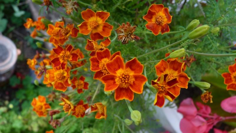 les plantes que je propose P1090834