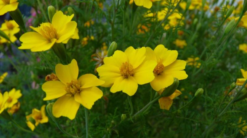 les plantes que je propose P1090835