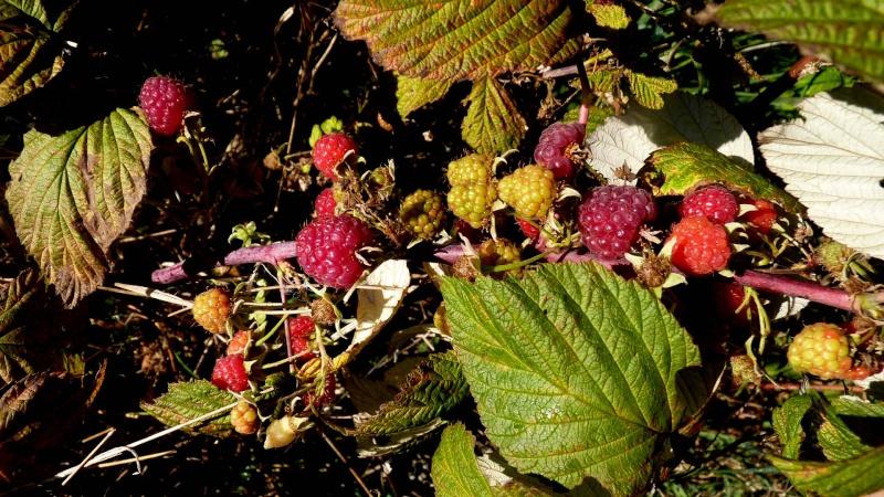 les plantes que je propose - Page 2 P1100355