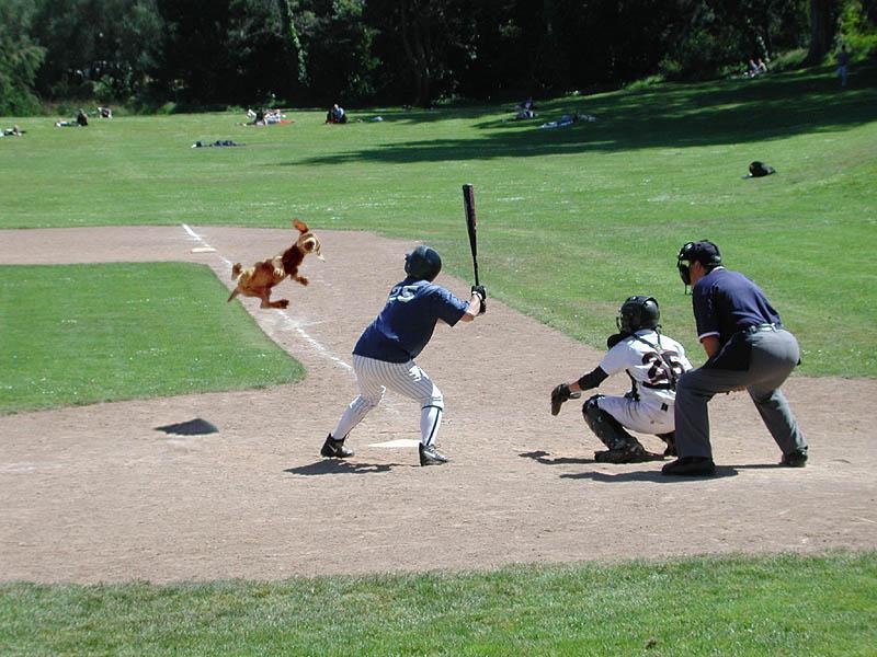 images drôles de baseball 32c1b510