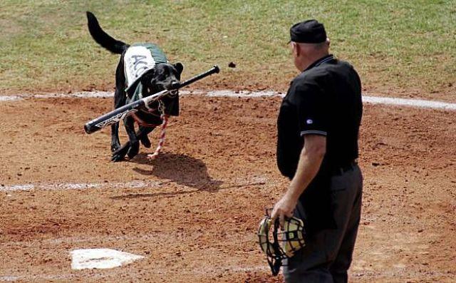 images drôles de baseball Daily_15