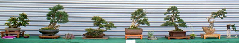Expo du matsukaze Bonsai Club d'Epinal Ramber10