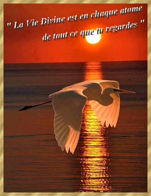envole toi par delà les mots - Page 3 Couche11