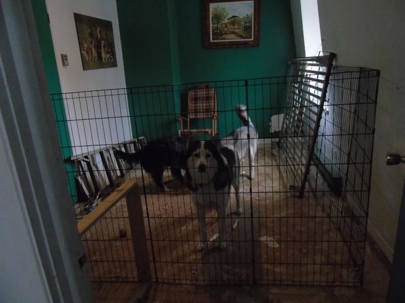 La chambre de mes chiens 02710