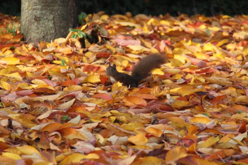 Wangen : gros plan sur le chipeur de noix Img_0910