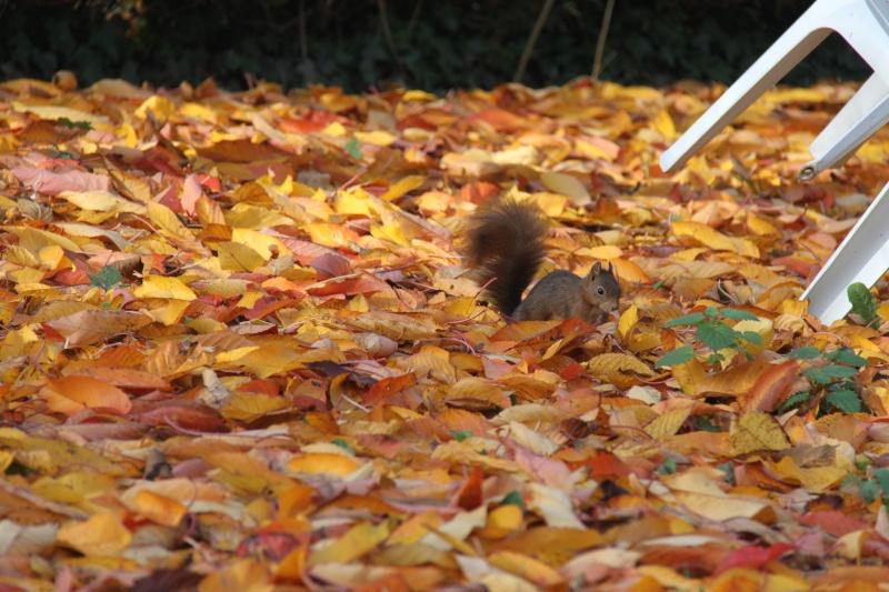 Wangen : gros plan sur le chipeur de noix Img_0911