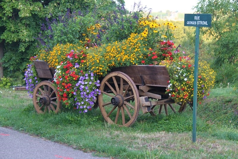 Fleurissement 2015 à Wangen Le_dir10