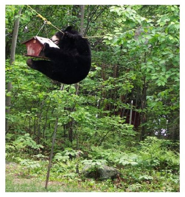 FUNNY PICTURES - Page 8 Bear_410