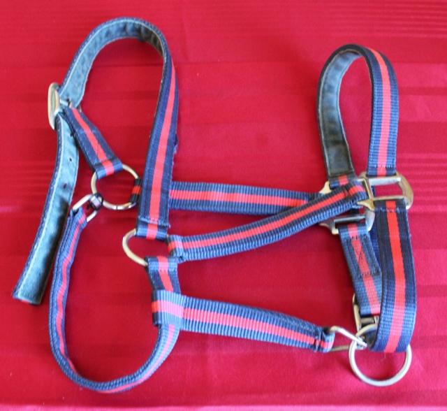 Brade divers affaires d'équitation : gilet, sangle, tapis, embouchures, plaque à neige... Img_9418