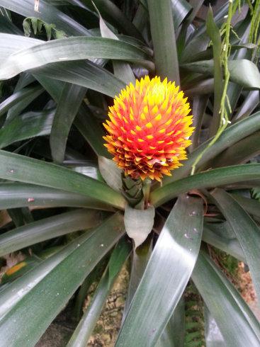 Orchidarium de Prangins (VD) 20150934