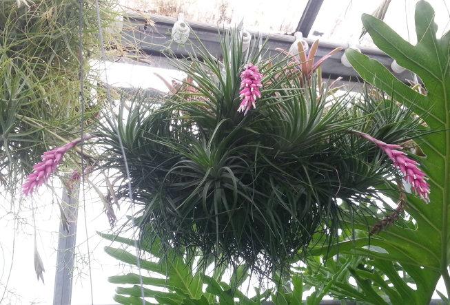 Orchidarium de Prangins (VD) 20150935