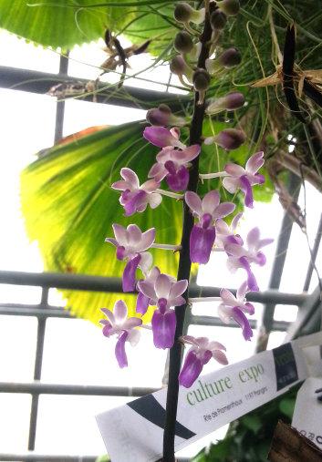 Orchidarium de Prangins (VD) 20150944