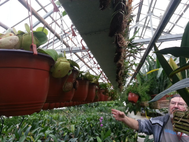 Orchidarium de Prangins (VD) 20150951