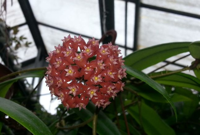 Orchidarium de Prangins (VD) 20150959