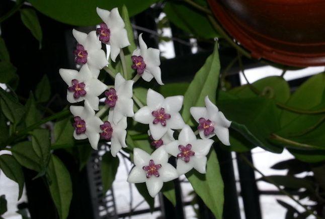 Orchidarium de Prangins (VD) 20150960