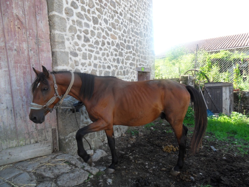 bienvenue cheval ONC (87)  Sdc17210