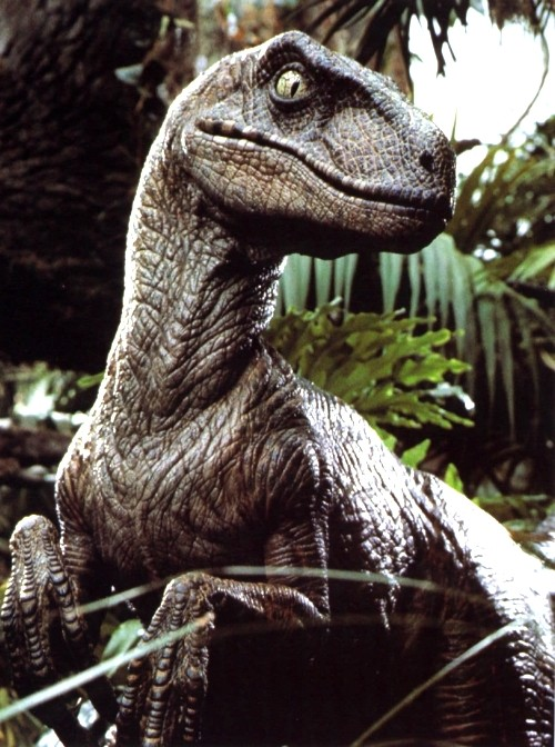 Vélociraptor Jurassic Park. - Page 2 Veloci10