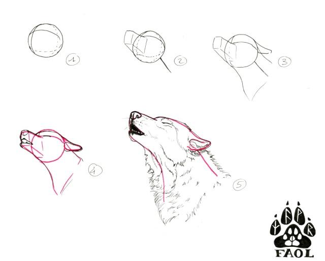Tuto comment dessiner un loup 2 page 3 - Dessiner des animaux facilement ...