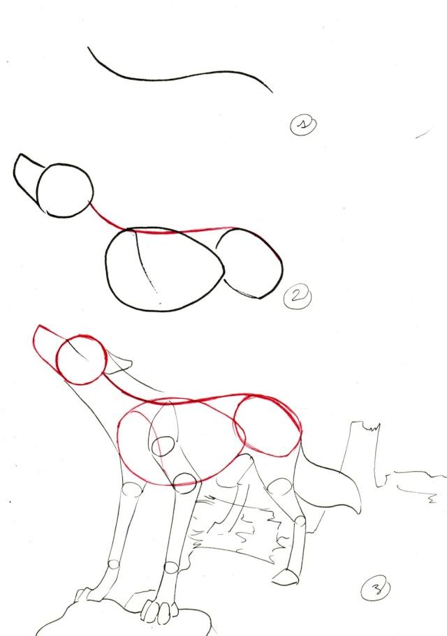 tuto : comment dessiner un loup ? (2) - Page 3 Loup_h12