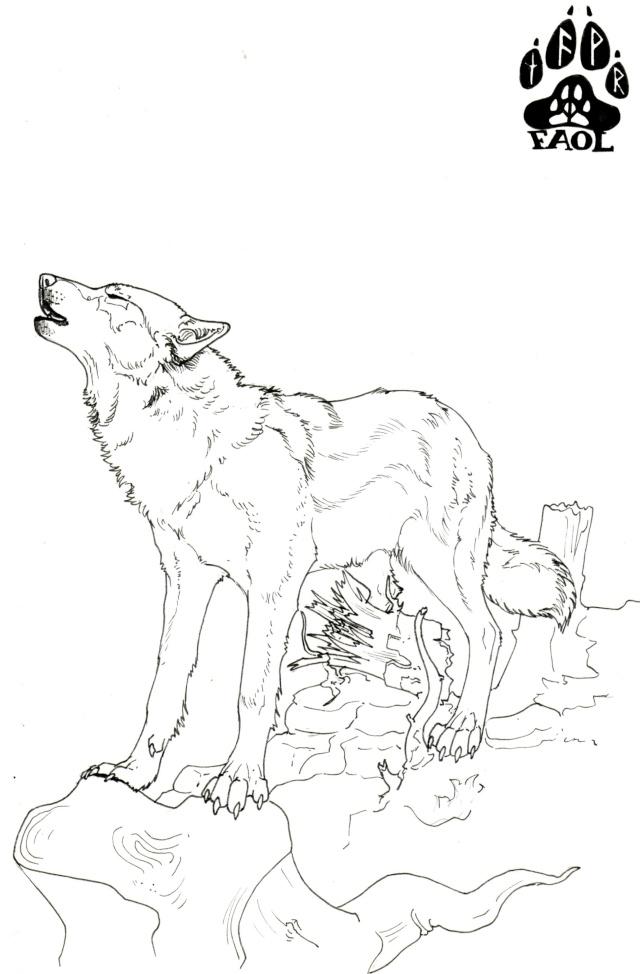 tuto : comment dessiner un loup ? (2) - Page 3 Loup_h13