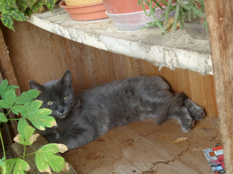 MISTI - chat mâle , 2 ans environ - (PERTUIS 84) - adopté par sa FA 00310