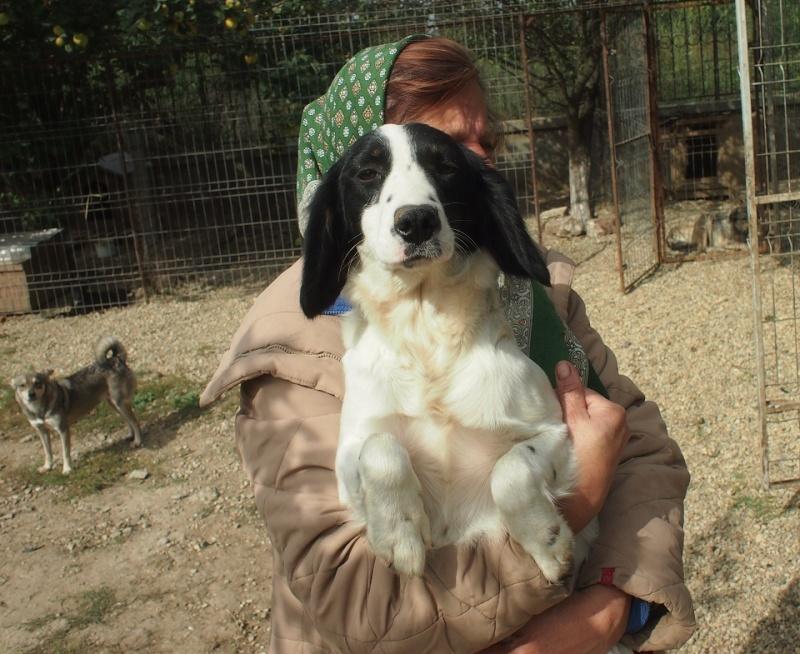 BONNIE- chiot femelle, croisée cocker née en mars 2015 - (CARMINA Bucarest) - adoptée par Evelyne (dpt67) Bonnie12