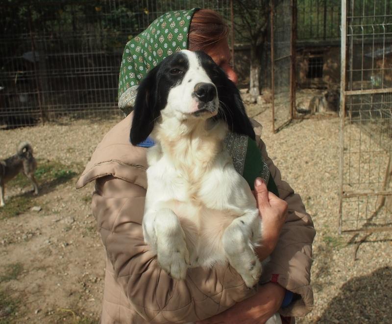 Carmina - BONNIE- chiot femelle, croisée cocker née en mars 2015 - (CARMINA Bucarest) - adoptée par Evelyne (dpt67) Bonnie15
