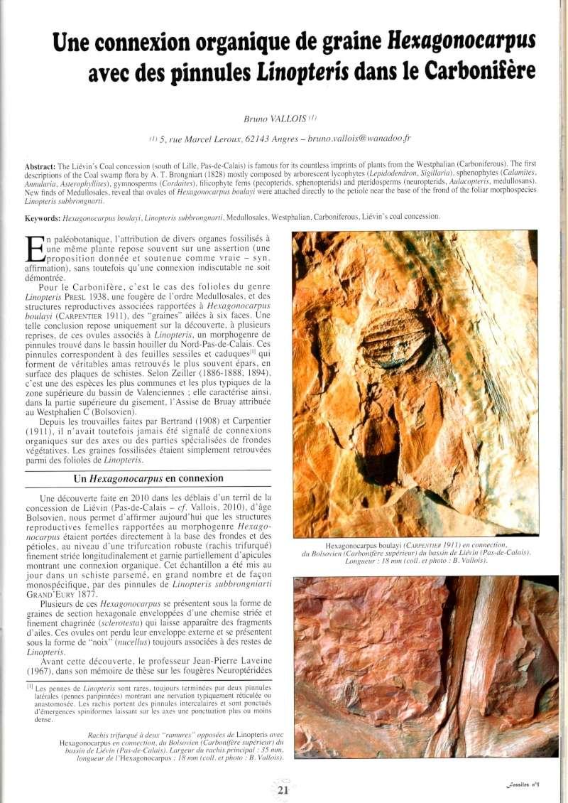 Trigonocarpus  Pachytesta  Hexagonocarpus  Img00110