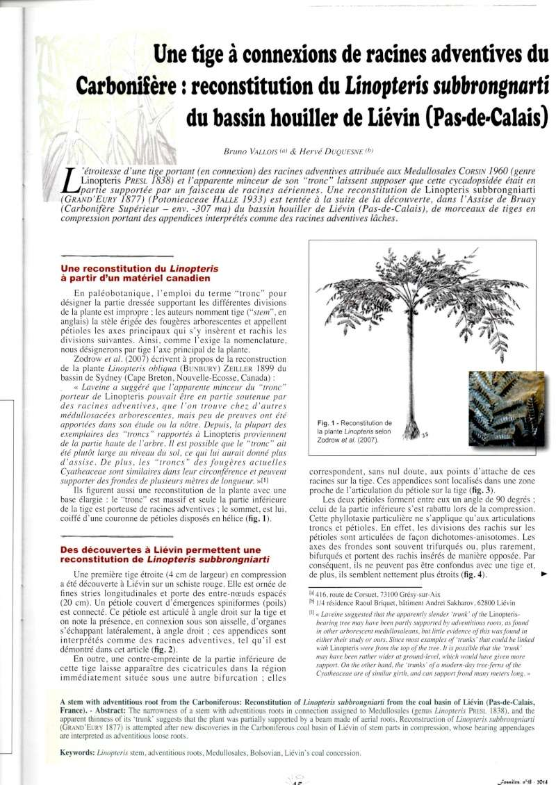 Trigonocarpus  Pachytesta  Hexagonocarpus  Img00310