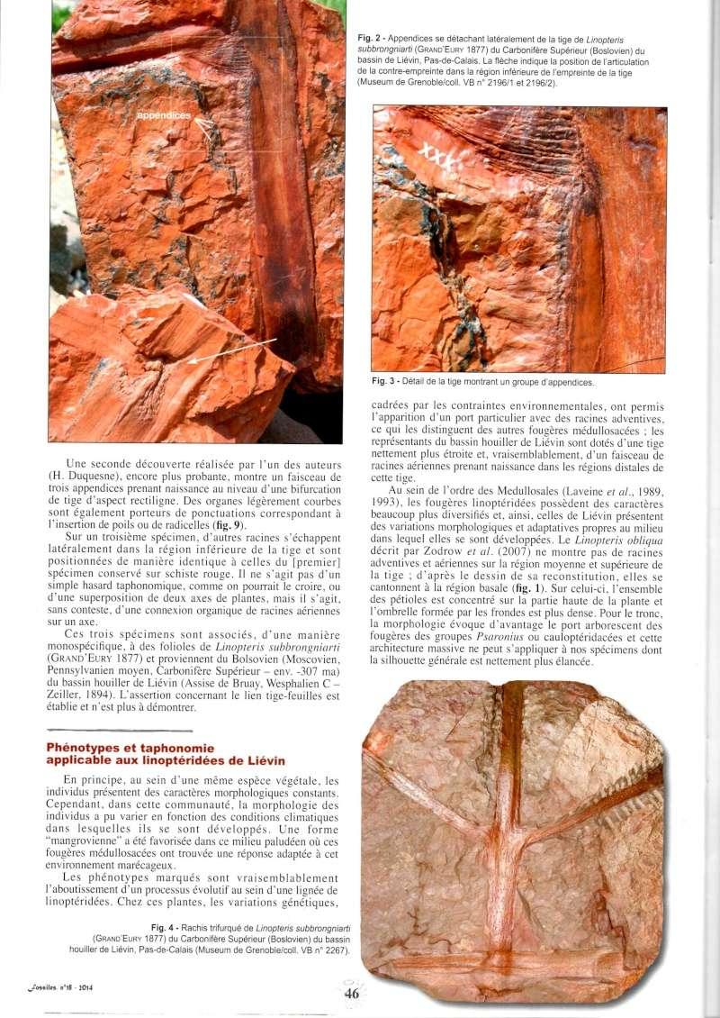 Trigonocarpus  Pachytesta  Hexagonocarpus  Img00410