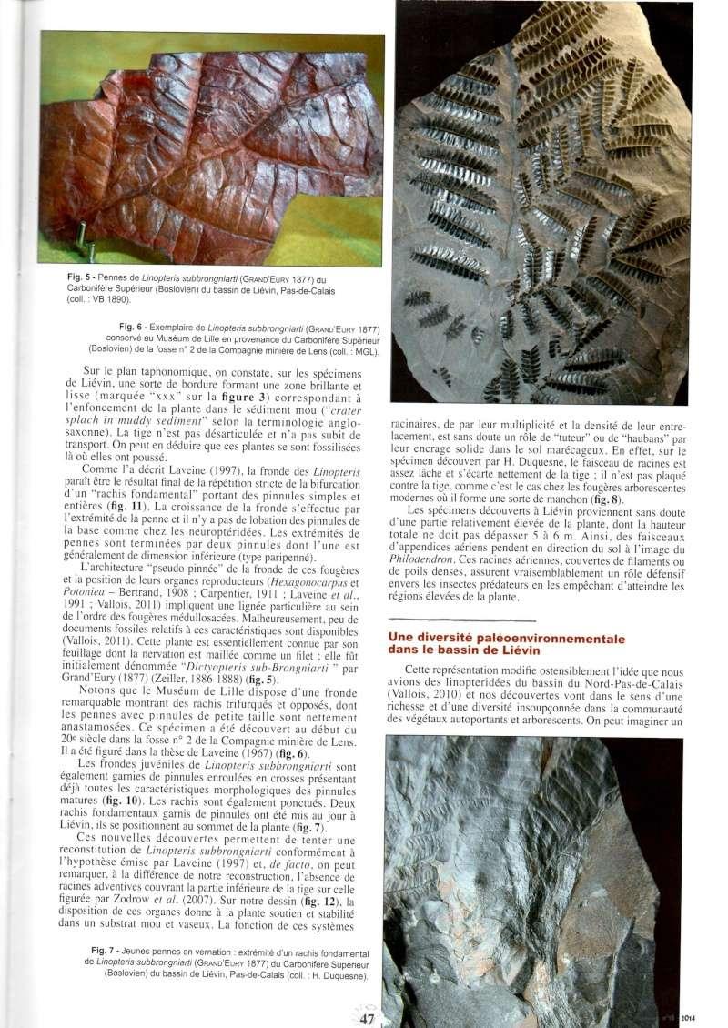 Trigonocarpus  Pachytesta  Hexagonocarpus  Img00510